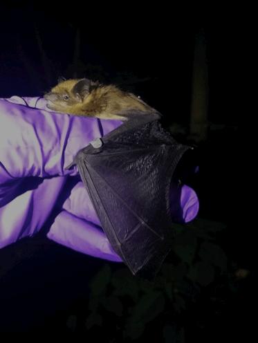 bats article