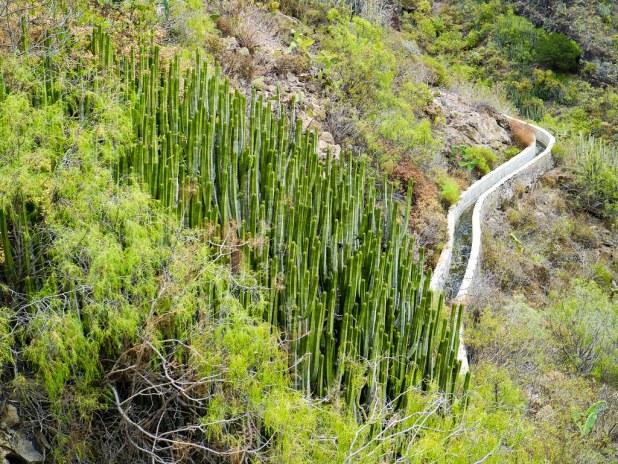Vegetación del sur de Tenerife