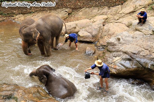 Maesa Elephant Camp Bathing Area
