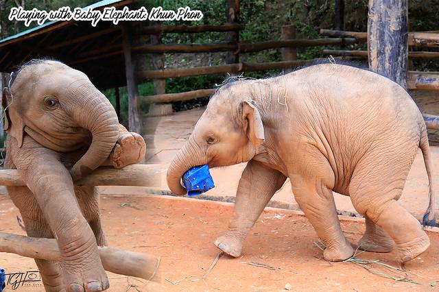 Baby Elephant Khun Phon