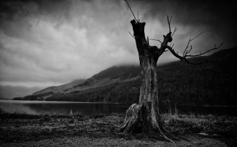Older Sister (The Other Buttermere Tree)...