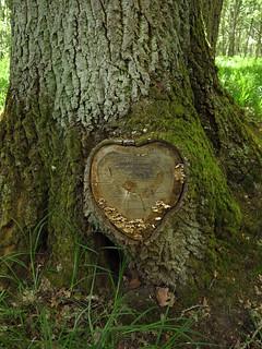 Le Coeur De La Foret : coeur, foret, Cœur, Forêt, Notre, Ackteon, Flickr