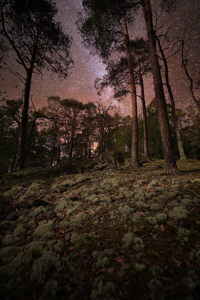 Bruit De La Foret La Nuit : bruit, foret, Forêt,, Bruit., Olivier, Stumpert, Wasser, Flickr