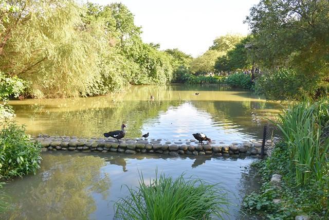 桃園八德景點》八德埤塘自然生態公園。小朋友最好的大自然教室。假日人多多 @ Emily生活旅遊誌 :: 痞客邦