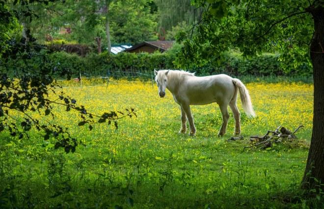 Day 145-20 white horse
