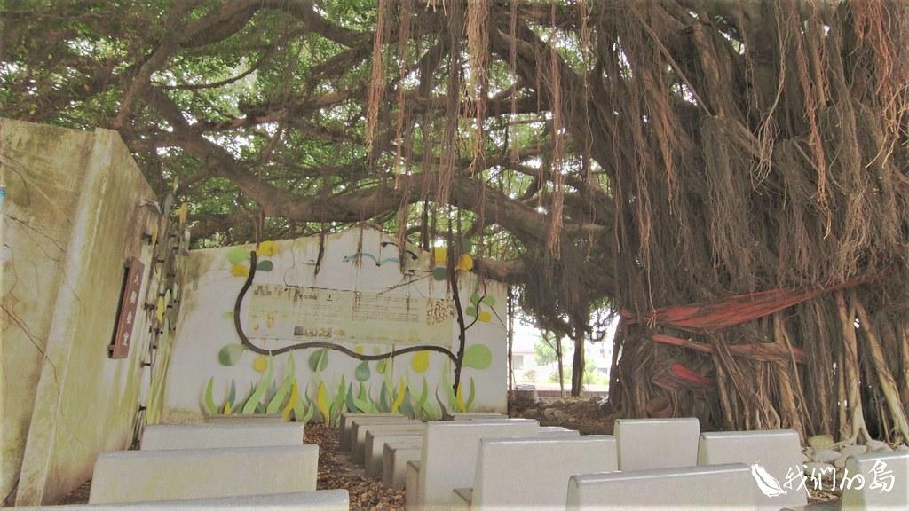 讓老樹成網紅 幕後推手拜訪全臺2000棵老樹 | 環境資訊中心