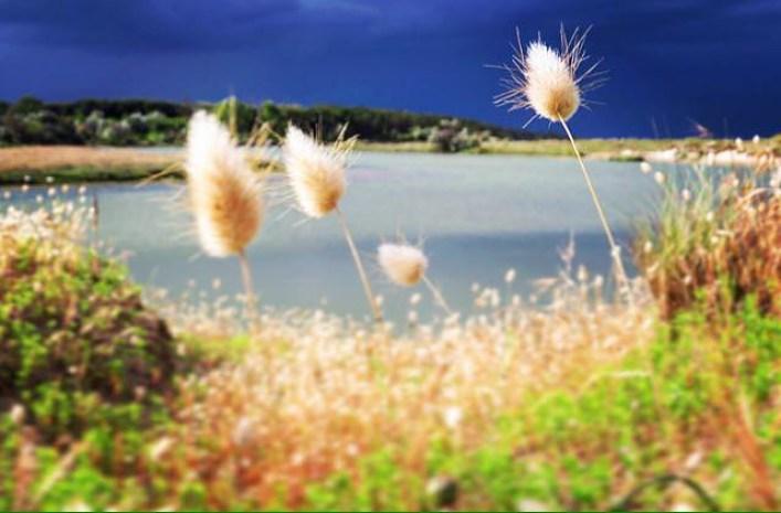 Slow Romagna: Foce del Bevano paradiso naturalistico