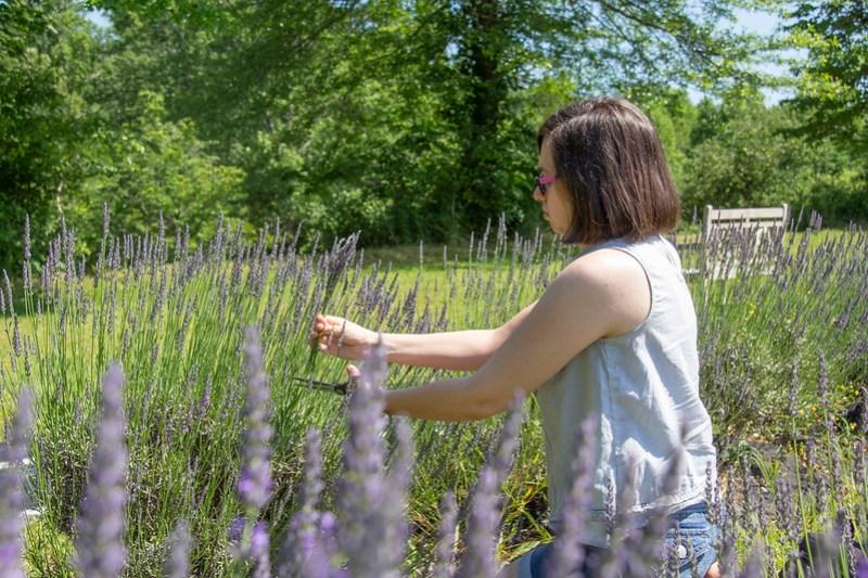 Lookout Lavender Farm5