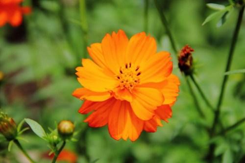 2020-06-28_Botanic_Garden_021