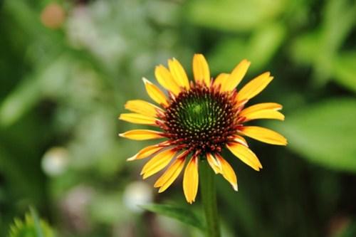 2020-06-28_Botanic_Garden_027