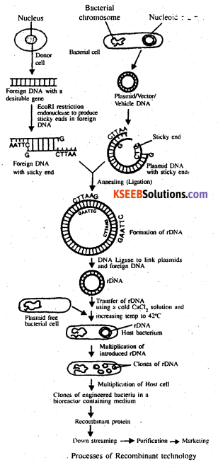 2nd PUC Biology Previous Year Question Paper March 2020