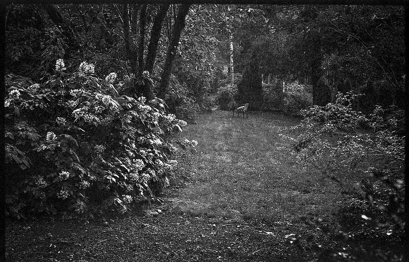 pouring rain, back yard, from the studio door, Asheville, NC, FED 4, Industar 61, Fomapan 200, Moersch Eco film developer, 7.1.20
