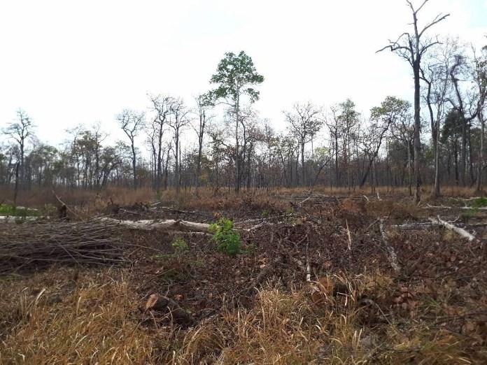 普雷朗野生物保護區中的空地,這裡曾經森林蓊鬱。圖片來源:普雷朗社群網絡(Prey Lang Community Network)