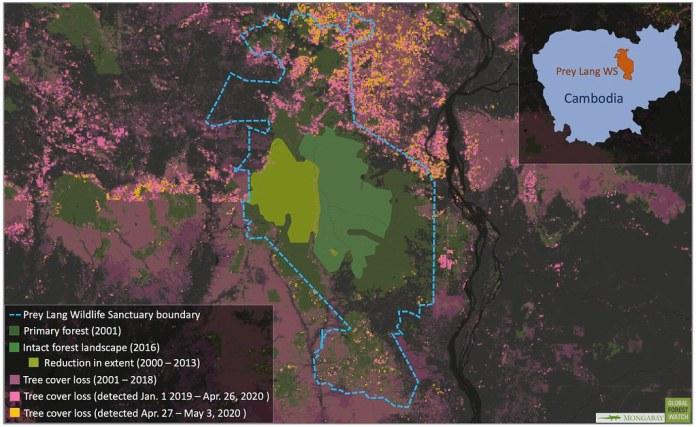 """普雷朗野生物保護區中包含柬埔寨最後一片「完整森林地景」(intact forest landscape,簡稱IFL)。所謂IFL指的是原始森林覆蓋面積夠大,且未受干擾,所以可以保有當地原生生物多樣性。然而,這片IFL的未來堪慮:2001到2013年間,該地區損失了將近半數森林覆蓋面積,且馬里蘭大學的衛星圖資顯示,近期越發嚴重的森林損失情況正逐漸侵入IFL的範圍內。資料來源:GLAD/UMD; Greenpeace, University of Maryland, World Resources Institute and Transparent World. """"Intact Forest Landscapes. 2000/2013/2016"""" Accessed through Global Forest Watch on May 11, 2020."""