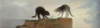 Riña de gatos Uti 485