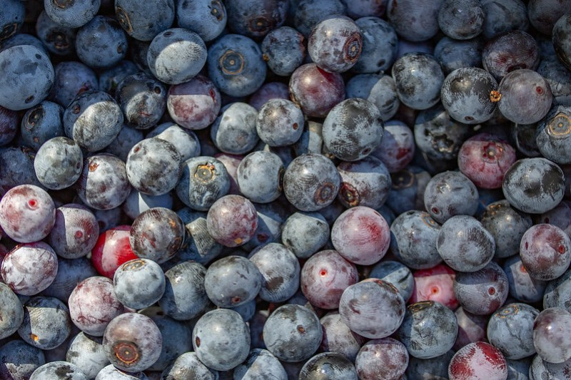 The Blueberry Farm45