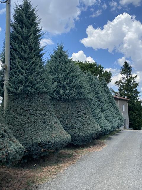 Lustige Baumkunst