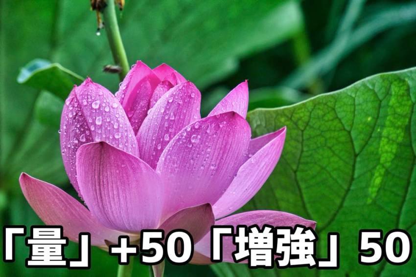 例2文字量50+増強50