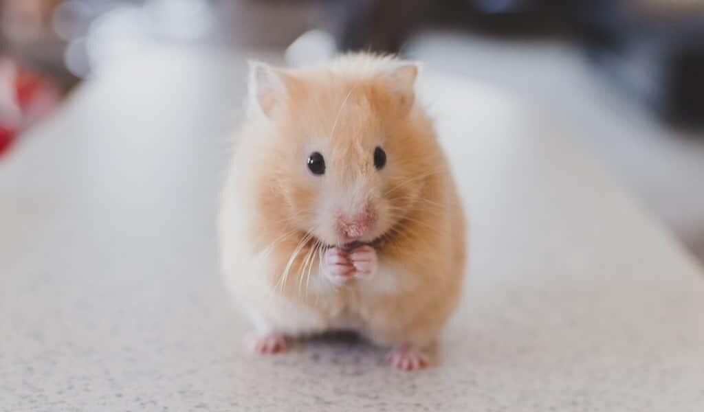 les-antibiotiques-nuisent-à-évolution-du-cerveau-social-chez-la-souris