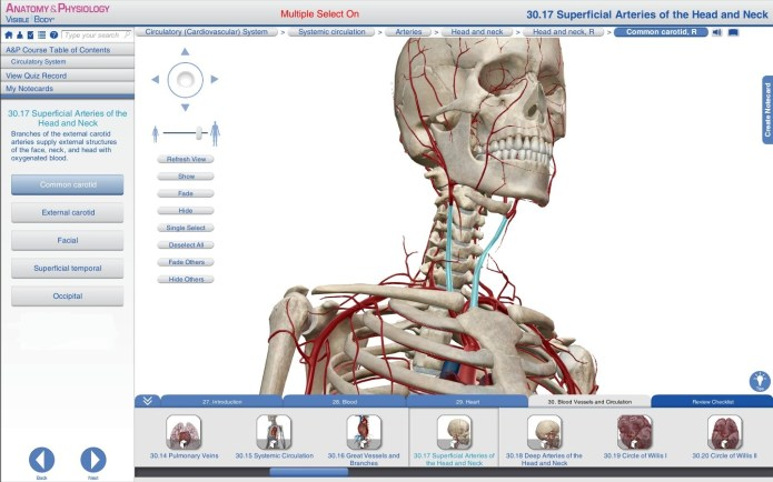 Working with Visible Body Anatomy and Physiology 1.5.04 full