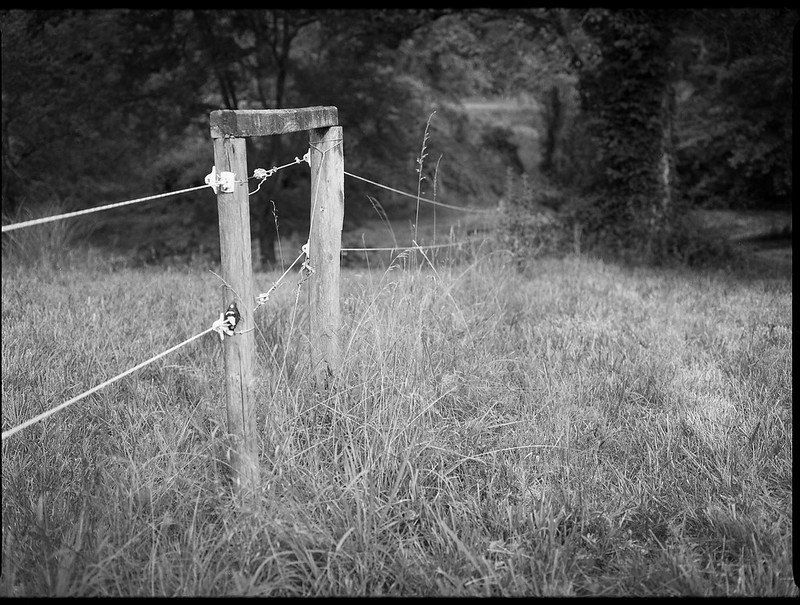 agricultural fence, meadow, grasses, distant trees, Biltmore Estate, Asheville, NC, Mamiya 645 Pro, Fomapan 200, Moersch Eco film developer, 7.20.20