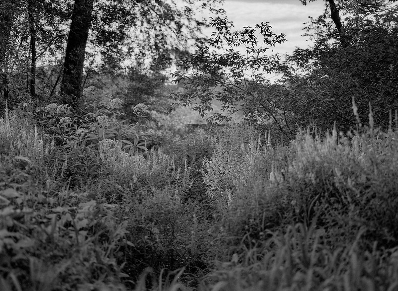 Field and Trees 3