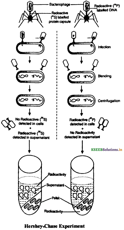 2nd PUC Biology Question Bank Chapter 6 Molecular Basis of