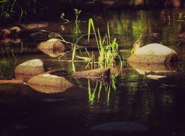 Week 33 - Water and Water Critters  This is a shot of Black Creek that runs through the Millennium Trail in Courtice. It is only 1.5 Kim's, but it is right behind my home and it is a nice spot to unwind and be one with nature.  #2020photochallenge