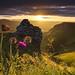 Thistle Sunrise on Winnats Pass