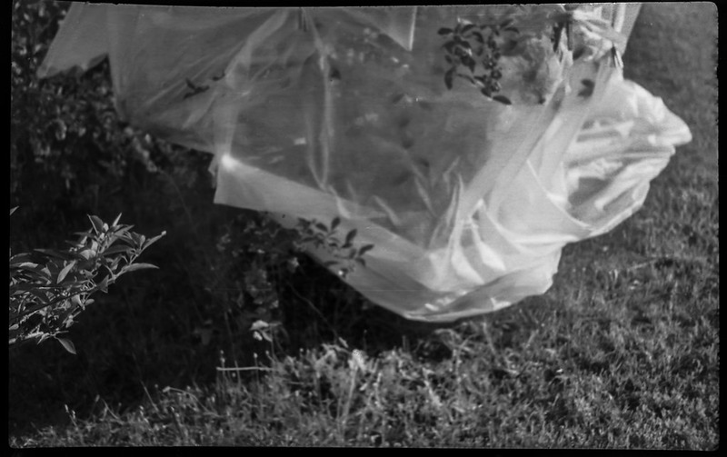 shrubbery, wrapped, plastic, neighbor's yard, Asheville, NC, Kochmann Korelle folding camera, Jos. Schneider Kreuznach Xenar 75mm f-4.5 lens,-127 film format, rera pan 100S, HC-110 developer, 8.4.20
