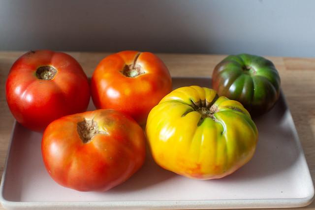 august tomato rainbow