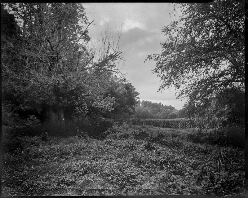 landscape at Biltmore Estate, distant cornfield, Asheville, NC, Graflex Crown Graphic, Graflex Optar 90mm f-6.8, Bergger Pancro 400, HC-110, 8.15.20