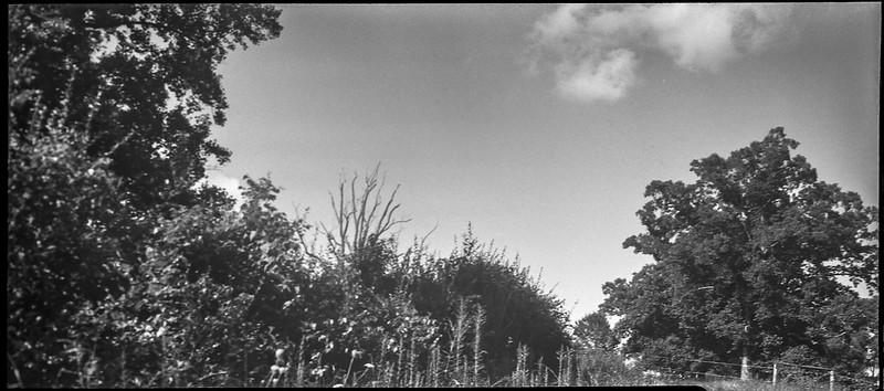 landscape at Biltmore, agricultural fence, Asheville, NC, Zeiss Ikon Cocarette, Kodak Tri-X 400, HC-110 developer, 8.17.20
