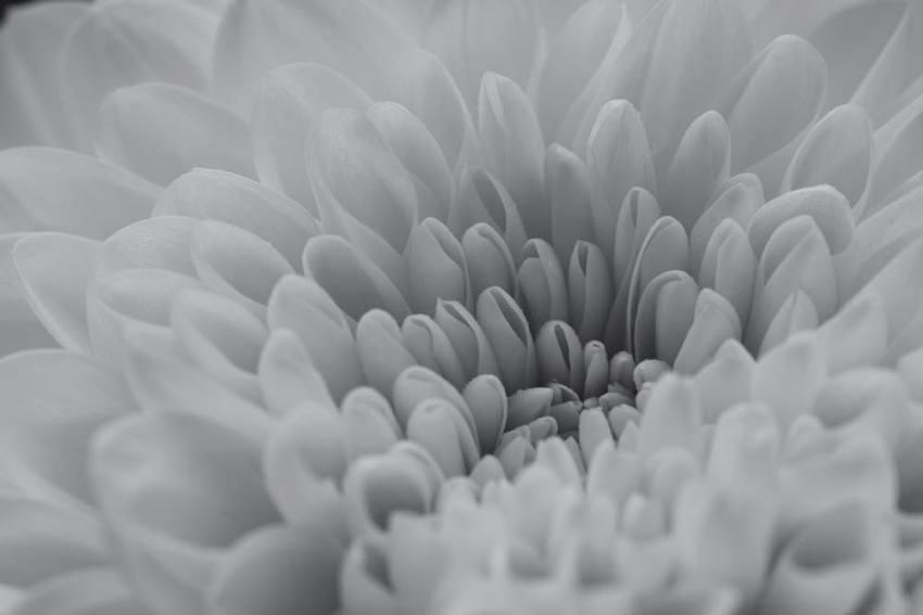 モノクロ質感花
