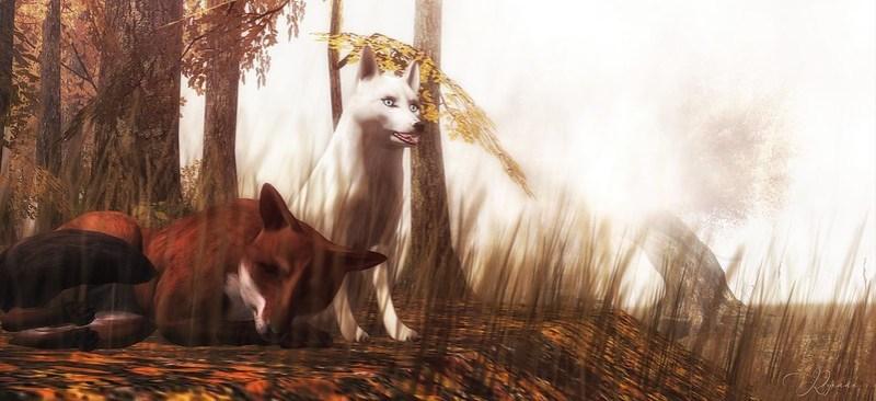•{ The Fox . . .