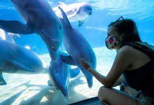 2020_SWF_Dolphin Underwater Viewing_Safety (1)