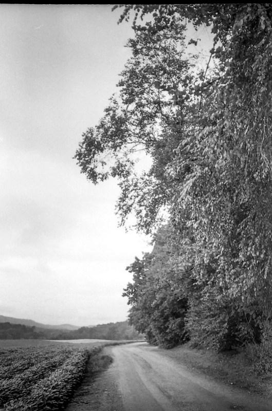 dirt roadway, tall trees, farm field, near dusk, Biltmore Estate, Asheville, NC, Minolta Freedom Dual 60, Kodak Tri-X 400, HC-110 developer, 8.21.20