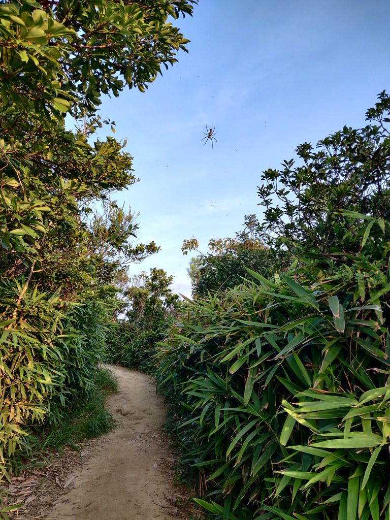 Spider Hong Kong Hike