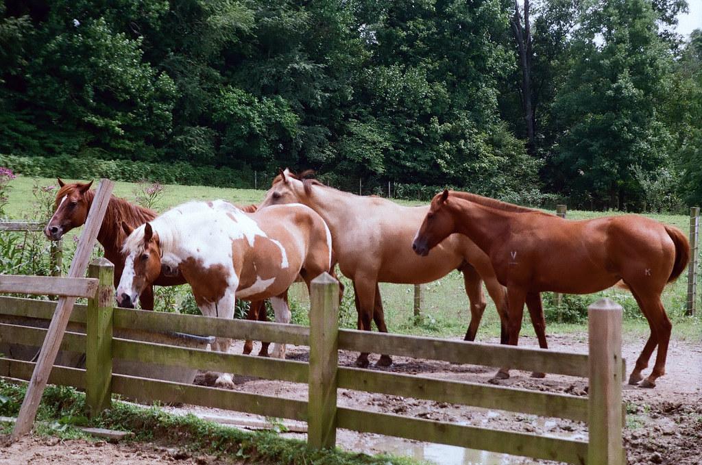 Horses at McCormick's Creek