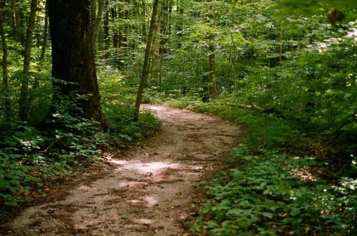 Path in McCormick's Creek SP