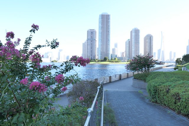 Sumida river walk