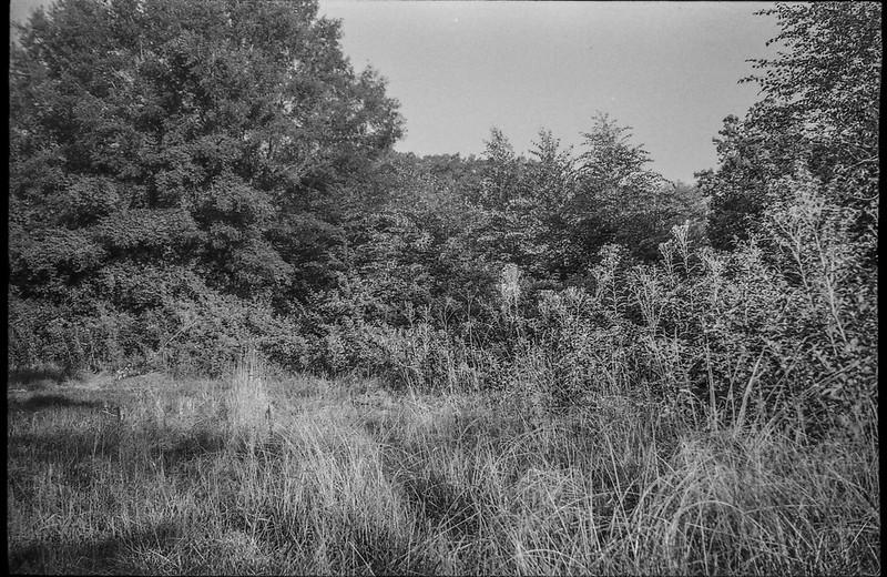 overgrown meadow, late light, forest's edge, Biltmore Estate, Asheville, NC, Leica C1, Fomapan 200, Moersch Eco film developer, late August 2020