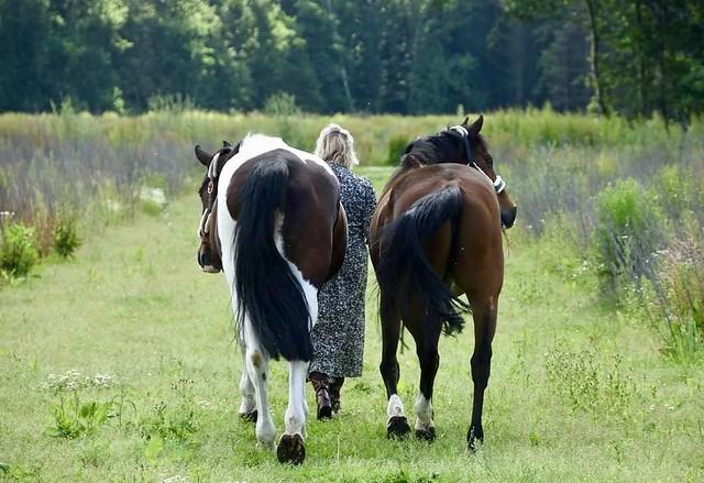 Ineke Holstein met paarden