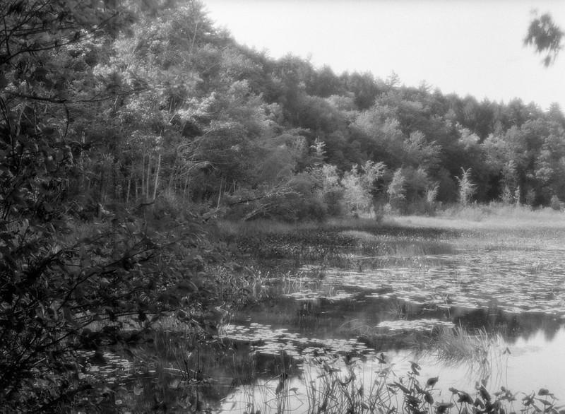 Hudson Pointe Preserve
