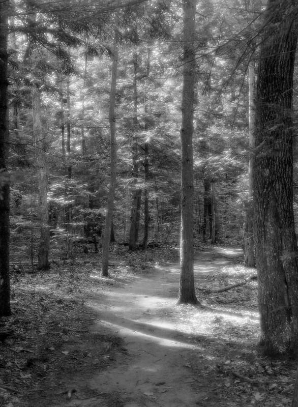 Forest Light #2