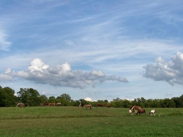 Horse in a field as clouds roll by.