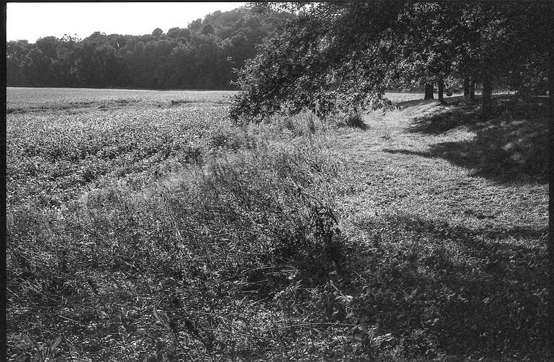 agricultural landscape, tree-lined, late light, Biltmore Estate, Asheville, NC, Minolta XG-M, Fomapan 200, HC-110 developer, 9.13.20