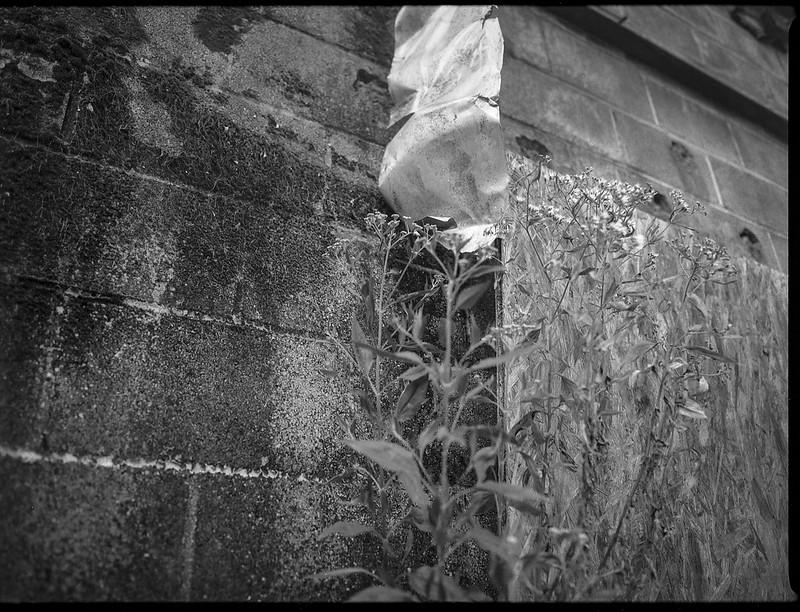 weeds, architectural facade, urban decay, Asheville Waste Paper Company, Asheville, NC, Mamiya 645 Pro, mamiya sekor 45mm f-2.8, Fomapan 200, HC-110 developer, 9.19.20