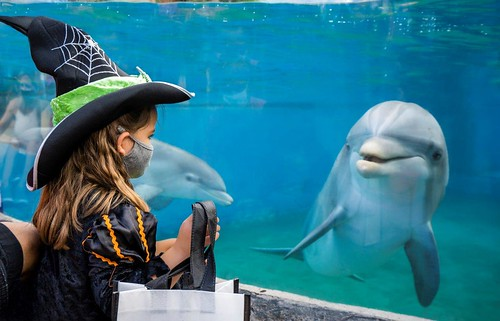 SeaWorld Spooktacular with dolphin