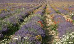Réminiscence d'un jardin provençal - Explore